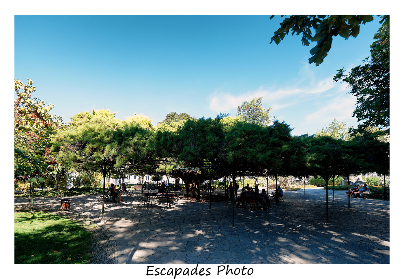 Jardin Principe de Real - Le cèdre plus que centenaire et son diamètre impressionnant