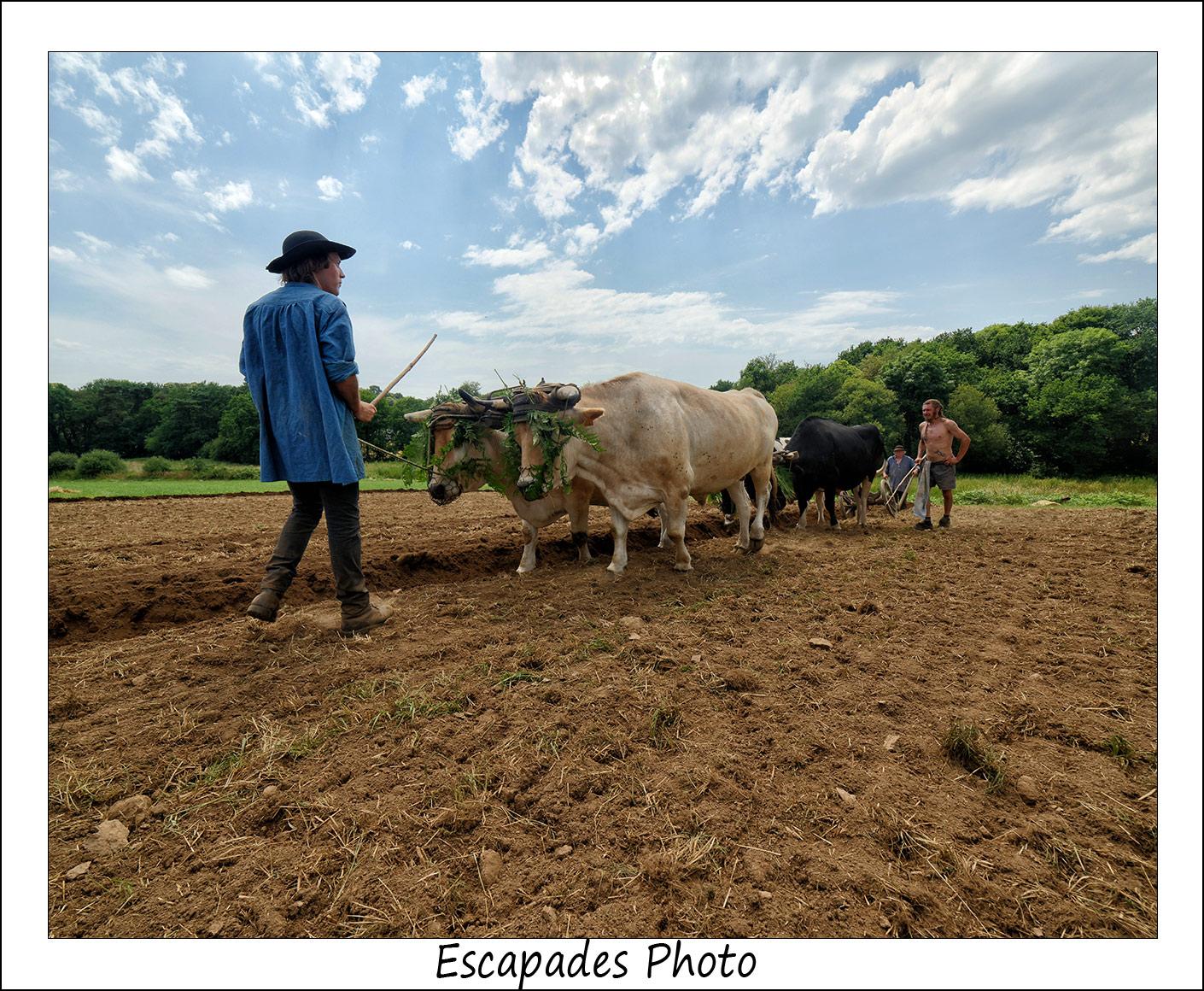 scène de labour à l'ancienne avec les bœufs de Jean Bernard Huon