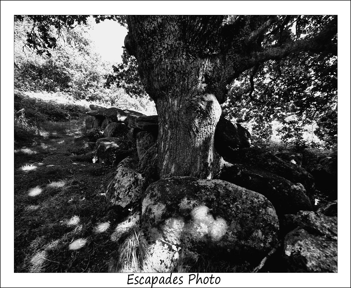 Kermeur-bihan : une allée couverte et des chênes