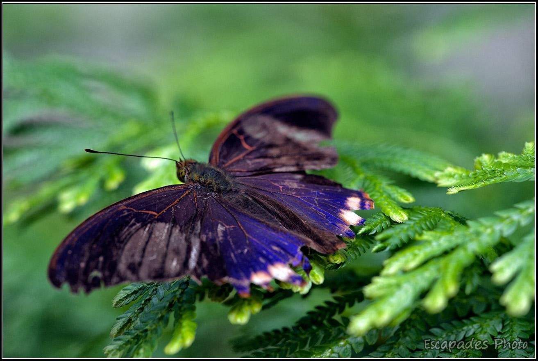 Magnifique papillon Butterfly Park Kuala Lumpur