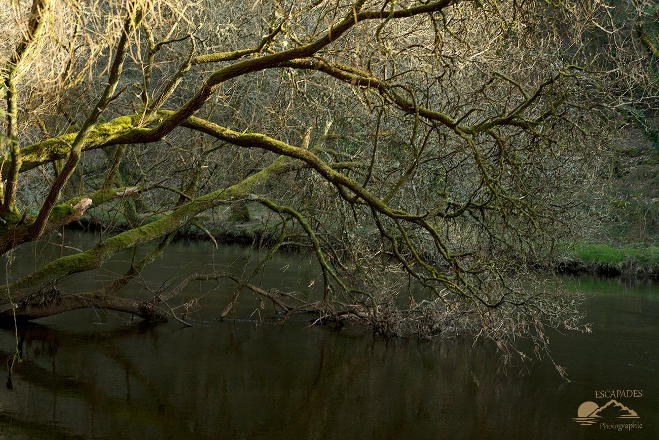 L'Ellé, le parcours d'un fleuve côtier sauvage qui doit le rester