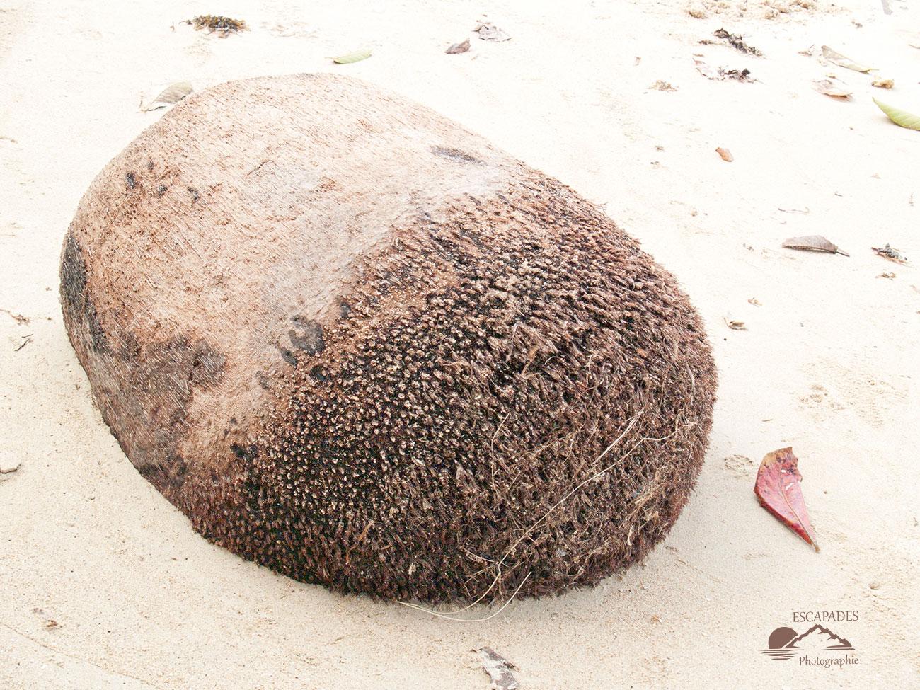 El Nido Palawan - vestige de cocotier dans le sable